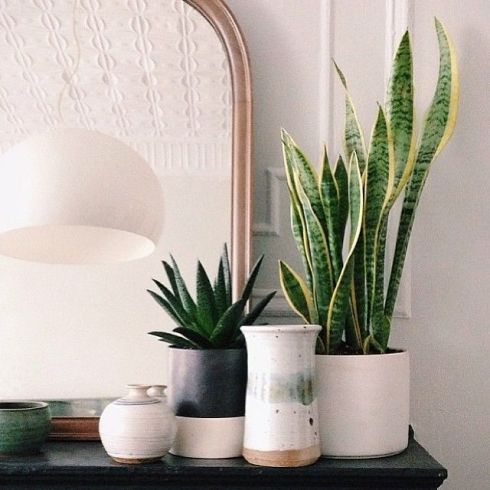 plants4